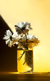 white daisies in a glass jar against yellow