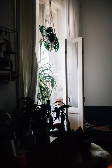white doors and curtains let in light for houseplants