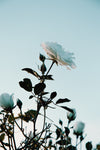 white flower blooming below a warm sunset