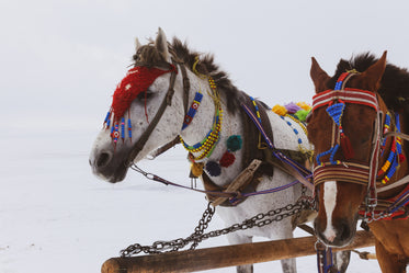 white horse and brown horse wearing colorful decoration