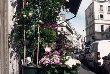 white pink and purple flowers outside a flower shop in paris