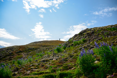 wildflowers, hillsides, and hiker