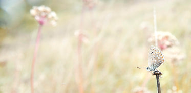 winged insect sits on a brown stick in a open field