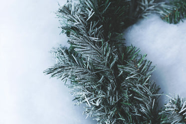Free Stock Photo of Winter Greens With Snow — HD Images