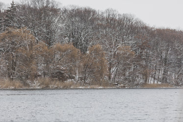 Free Winter Riverbank Trees Photo — High Res Pictures