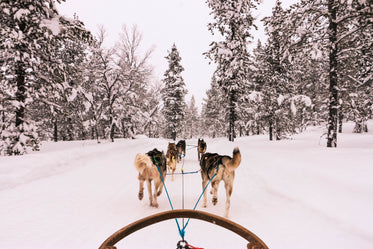 winter view from a dog sled
