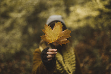 woman holding maple leaf in fall