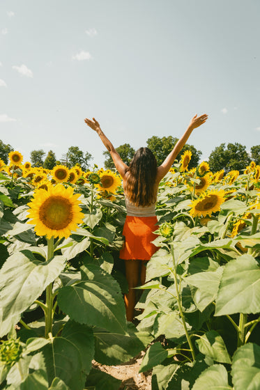 woman with her arms to the sun in a sunflower field