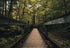 wooden boardwalk nature path