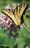 yellow and black butterfly on a purple plant