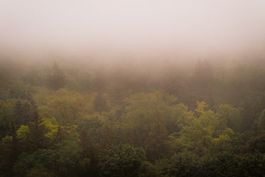 yellow and brown tree tops shrouded in fog