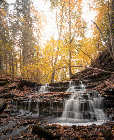 yellow autumn trees and a trickling waterfall
