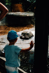 young person holds a hand up to the glass waving at a tortoise