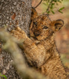 young wild cat hugs the side of a tree